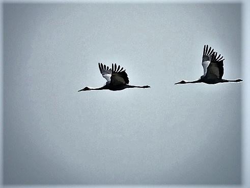 2 lindu suurem